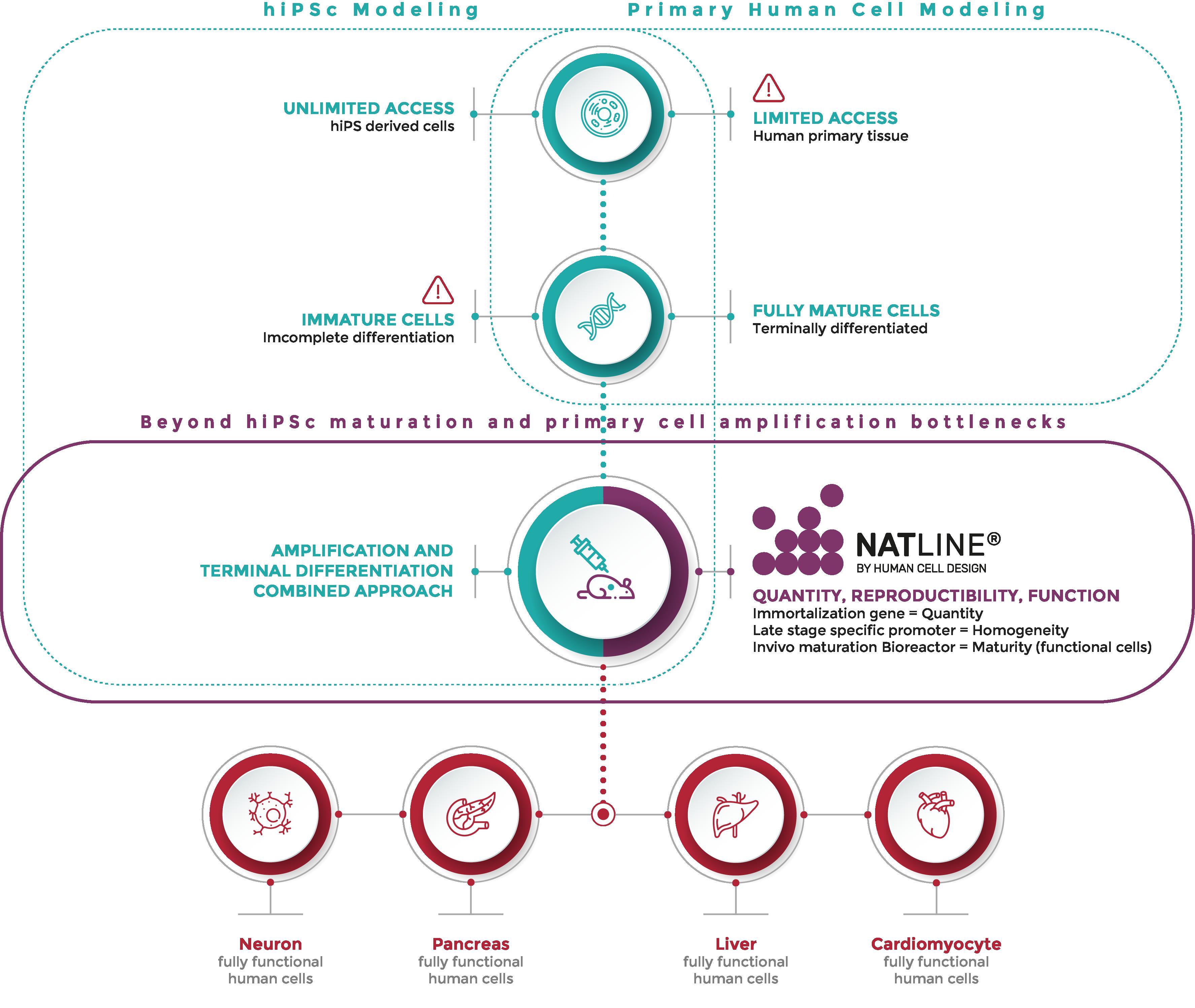 human-cell-design-schema-natline-platform