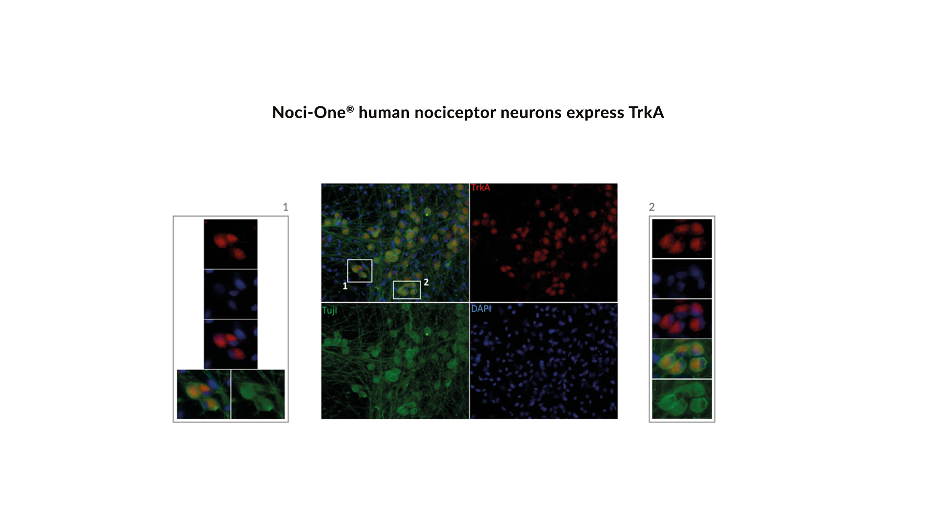 technical-validation-sheet-noci-one-human-cell-design-2020-12-figure-2